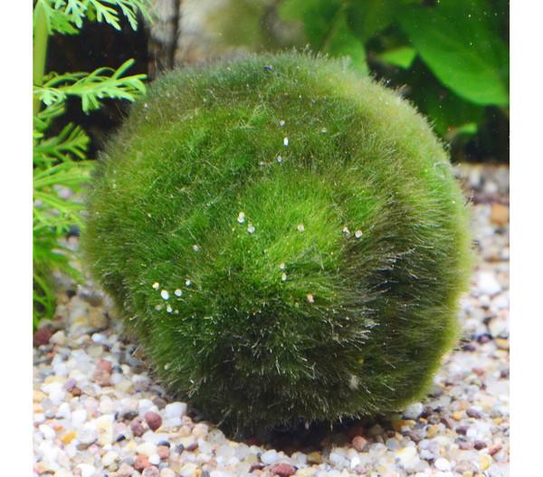 Planet Plants Aquarium-Pflanzen 80er Set Bund, Topf & Holz