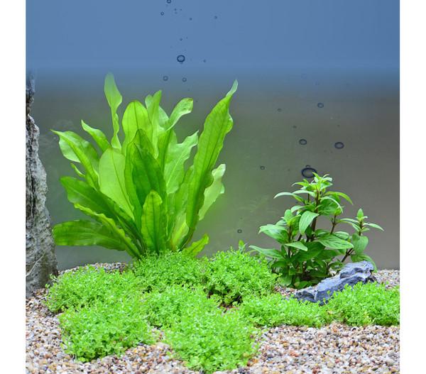 Planet Plants Aquarium-Pflanzen 80er Set
