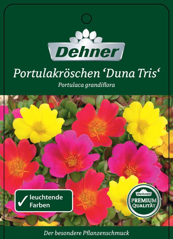 Portulakröschen 'Duna Tris'