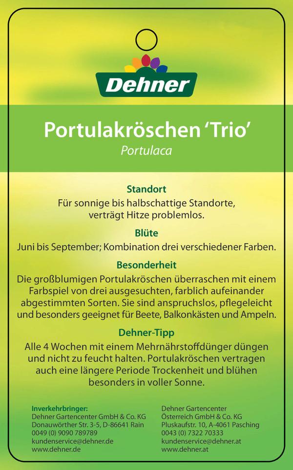 Portulakröschen 'Trio', Busch