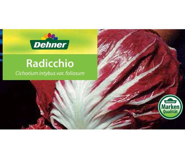 Radicchio, 12er Schale