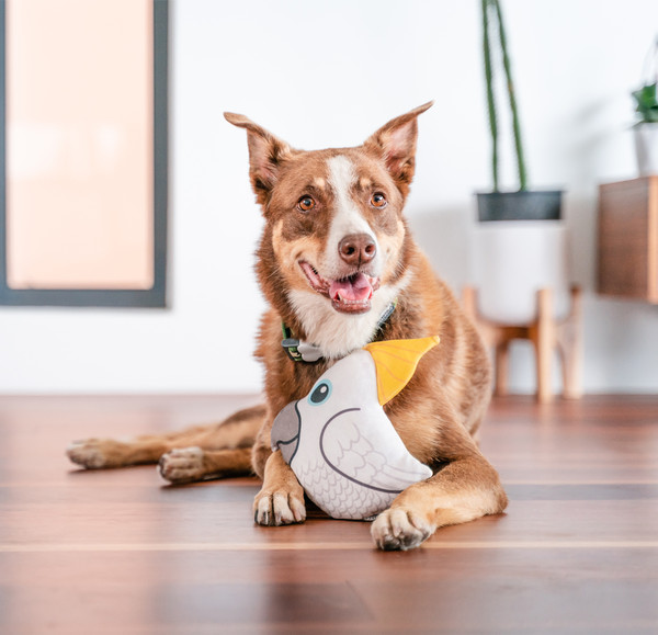 Red Dingo Hundespielzeug DURABLES Toys Kakadu