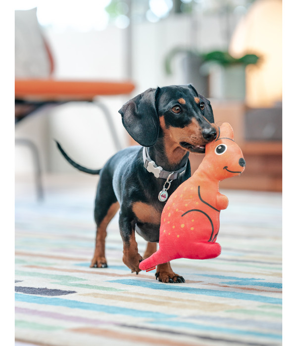 Red Dingo Hundespielzeug DURABLES Toys Känguru