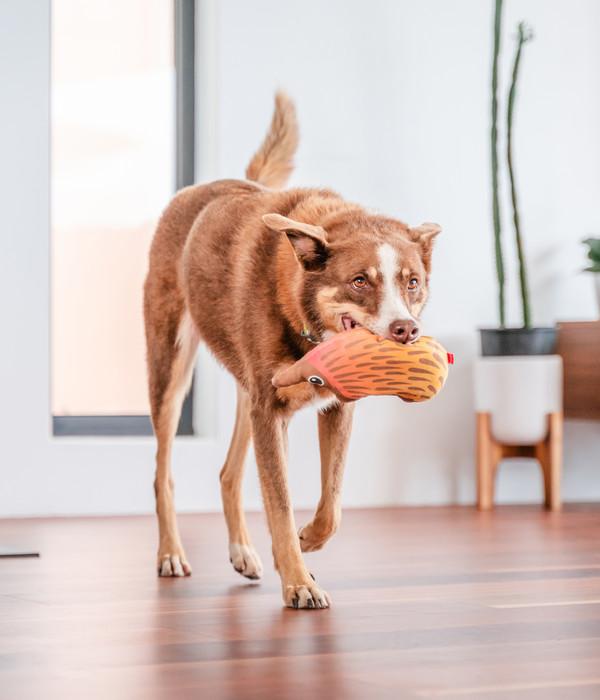 Red Dingo Hundespielzeug DURABLES Toys Nasenbär