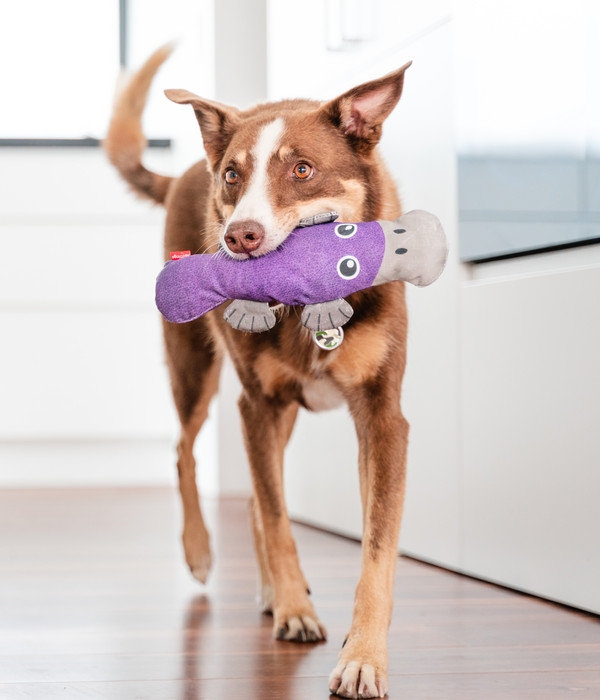 Red Dingo Hundespielzeug DURABLES Toys Schnabeltier