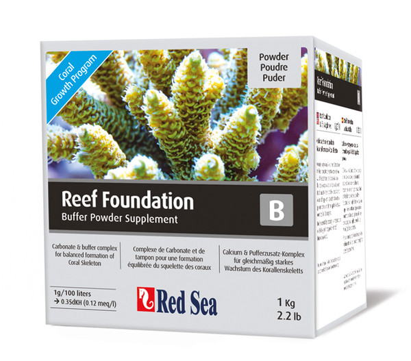 Red Sea Korallenwachstum Reef Foundation B (KH)