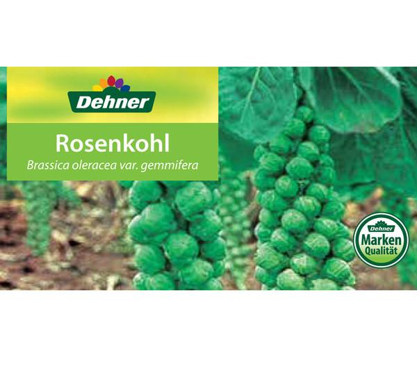 Rosenkohl, 12er Schale