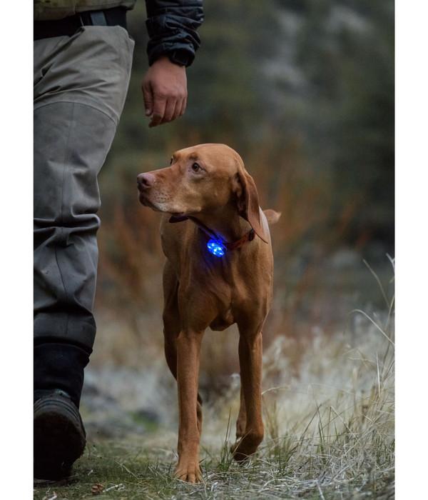 RUFFWEAR® Hunde-Sicherheitsleuchte THE BEACON™