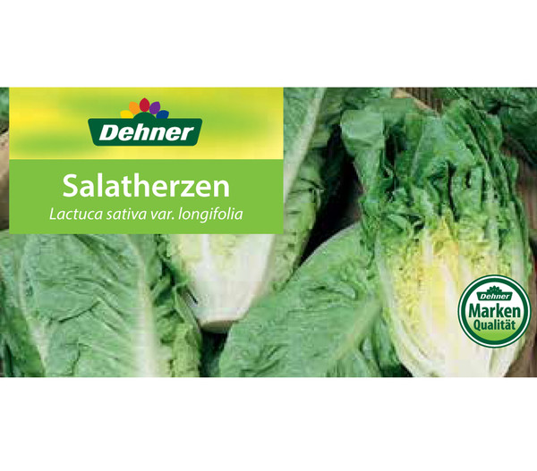 Salatherzen, lausresistent