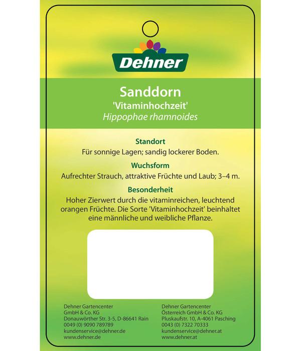 Sanddorn 'Vitaminhochzeit'