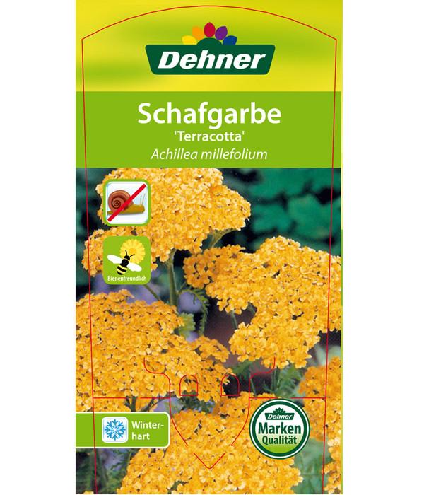 Schafgarbe 'Terracotta'