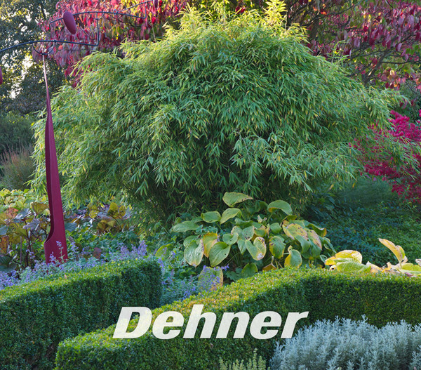 Schirm Bambus Jumbo Dehner