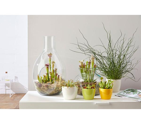 Schlauchpflanze-Arrangement