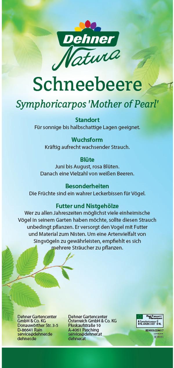 Schneebeere, Perlmuttbeere 'Mother of Pearl'