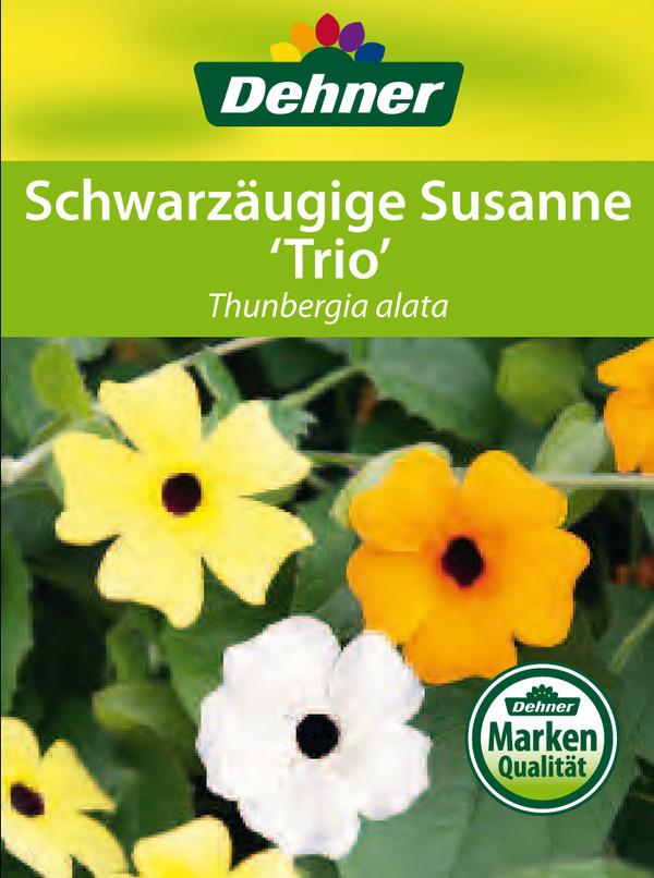 Schwarzäugige Susanne 'Trio'