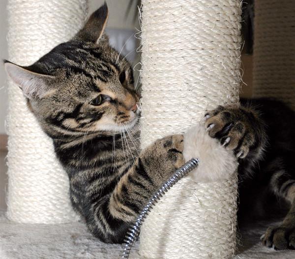 """Silvio Design Kratzbaum """"Kitty"""""""