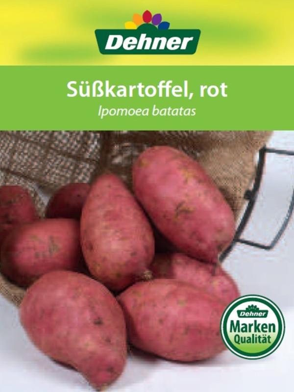 Süßkartoffel, rot