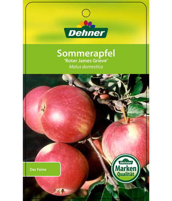 Sommerapfel 'Roter James Grieve'