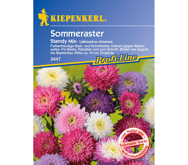 Sommeraster Standy Mix, Saatgut von Kiepenkerl