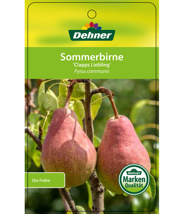 Sommerbirne 'Clapps Liebling'