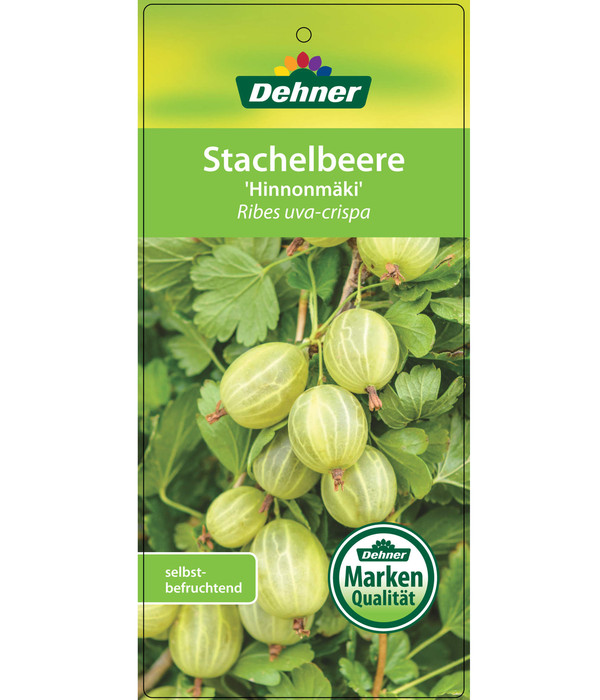 Stachelbeere 'Hinnomaeki', grün