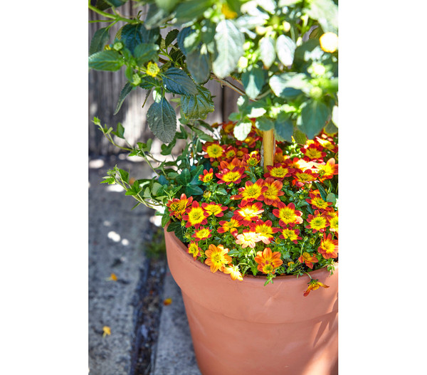 Terrakotta-Pflanzgefäß Calima