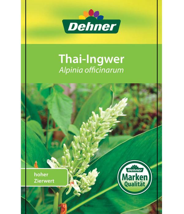 Thai-Ingwer