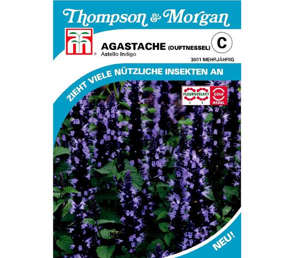 Thompson & Morgan Samen Duftnessel 'Astello Indigo'