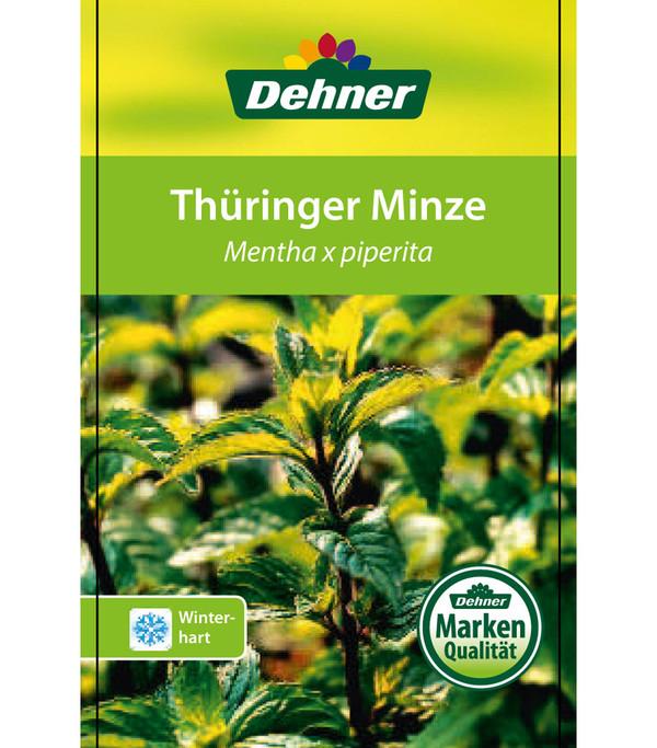 Thüringer Minze
