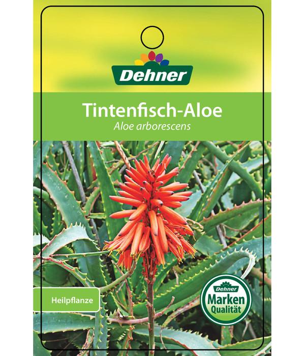 Tintenfisch-Aloe