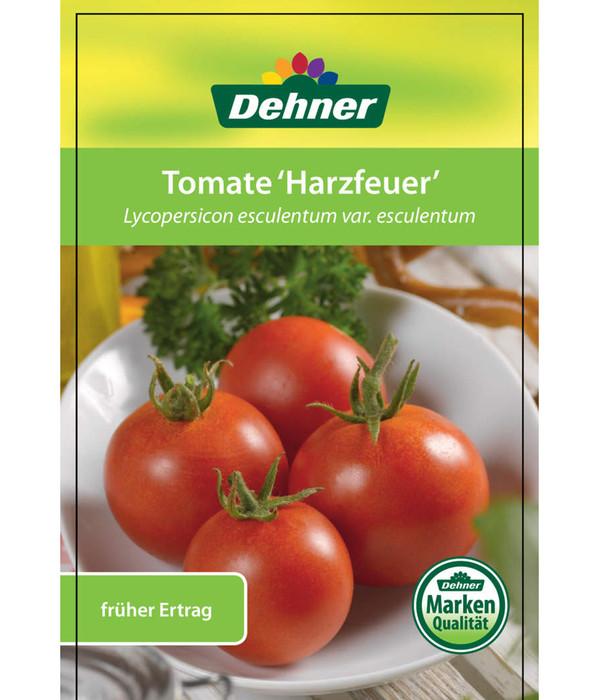 Tomate 'Harzfeuer'