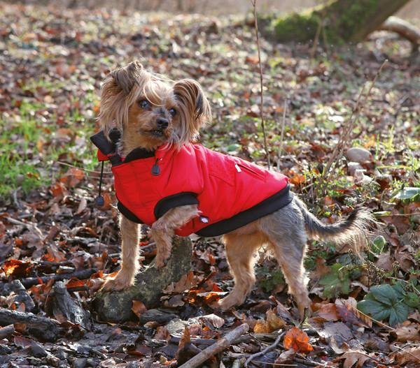 Trixie Wintermantel Palermo für Hunde