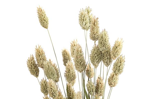 Trockenblumenbund Glanzgras, natur