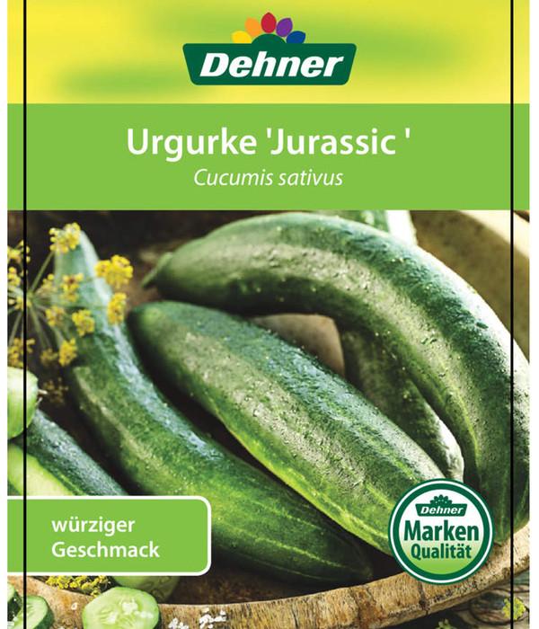 Urgurke 'Jurassic'