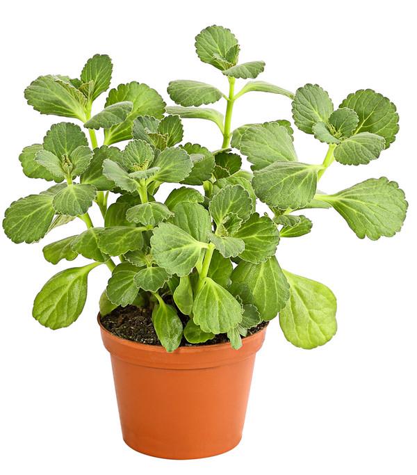 verpiss dich pflanze 39 verpiss dich 39 pflanze von g. Black Bedroom Furniture Sets. Home Design Ideas