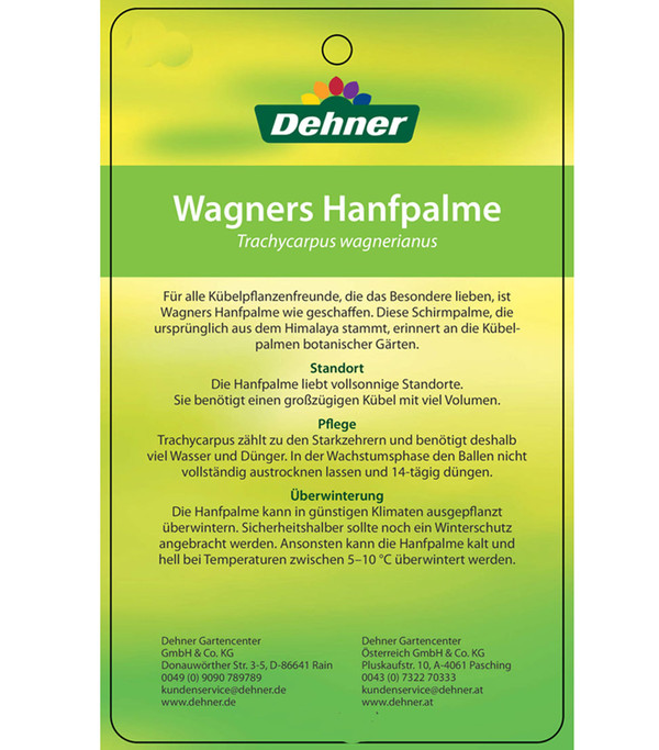 Wagners Hanfpalme