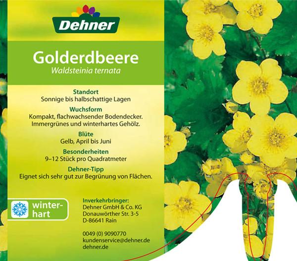 Waldsteinie - Golderdbeere