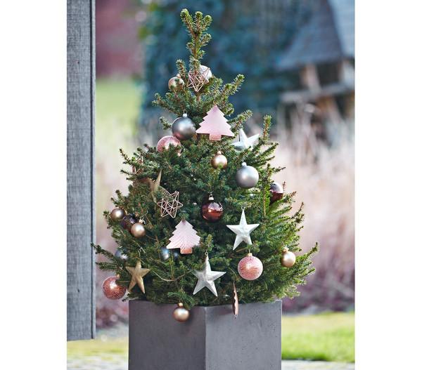 Weihnachtsbaum - Zwerg-Fichte 'Little Santa'®