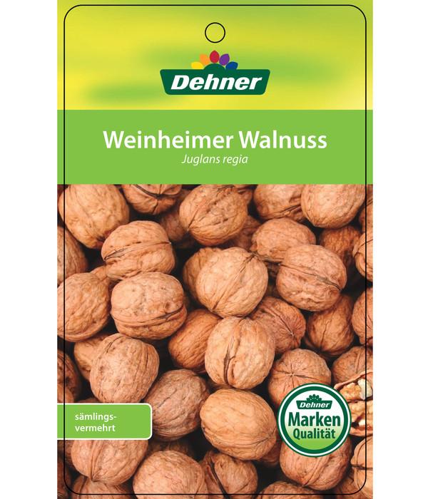 Weinheimer Walnuss Klon 139