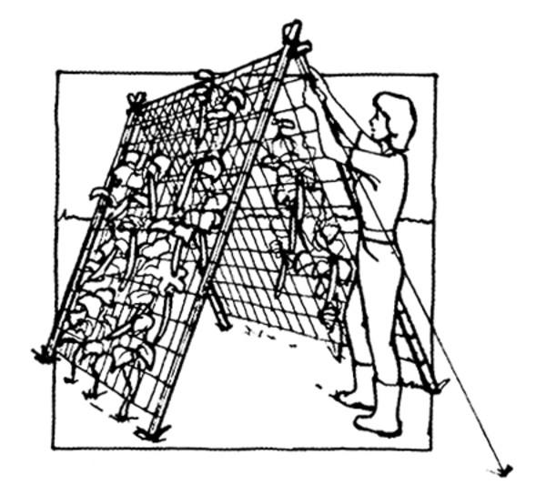 Windhager Ranknetz, 5 x 2 m