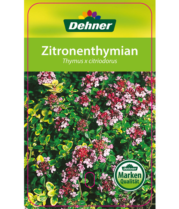 Zitronen-Thymian