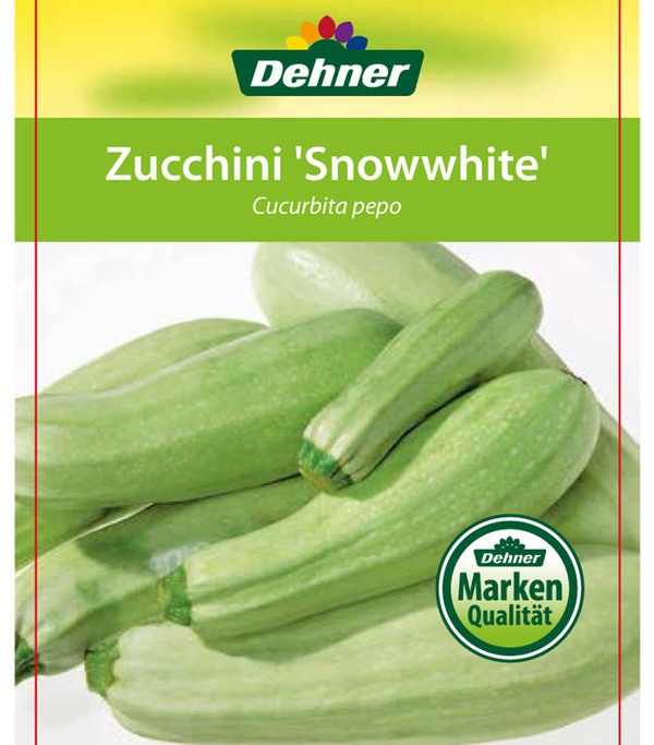 Zucchini 'Snowwhite'