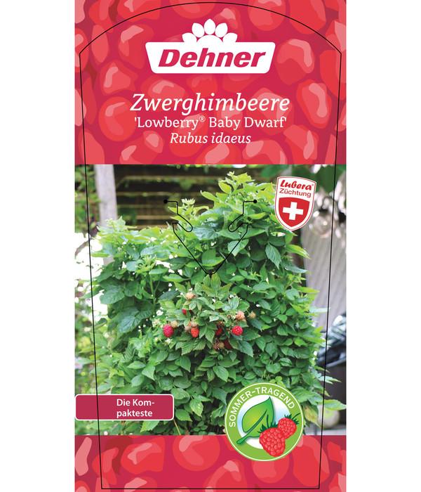 Zwerghimbeere Lowberry® 'Baby Dwarf®'