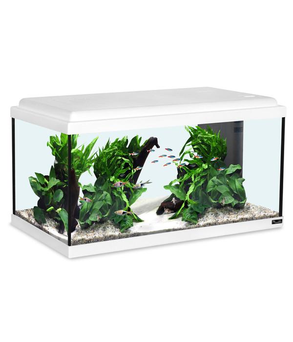 Aquarium Set Led : aquatlantis advance 60 led aquarium set dehner ~ Watch28wear.com Haus und Dekorationen