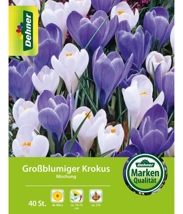 Berühmt Dehner Blumenzwiebel Großblumiger Krokus 'Mischung blau/weiss @HG_05