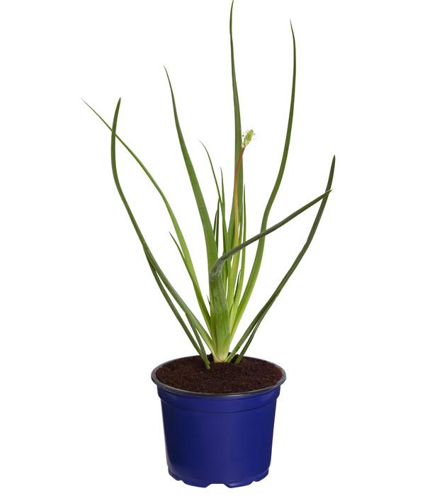 dehner erste hilfe pflanze dehner. Black Bedroom Furniture Sets. Home Design Ideas