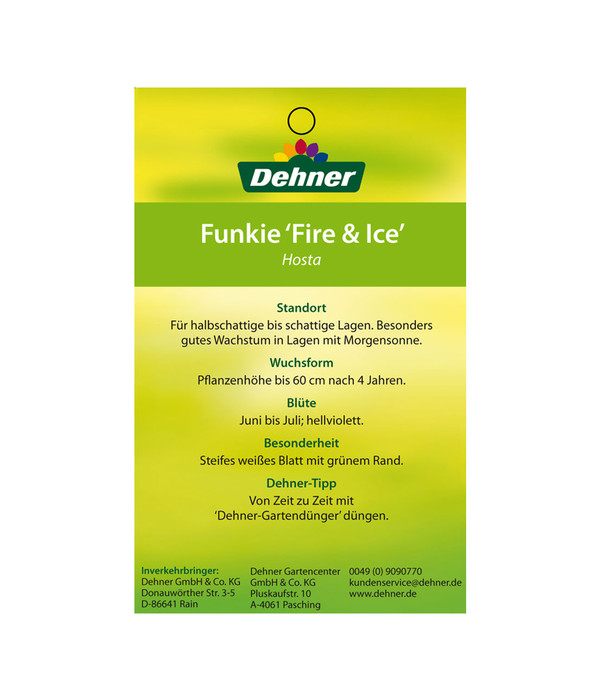 dehner funkie 39 fire and ice 39 dehner. Black Bedroom Furniture Sets. Home Design Ideas