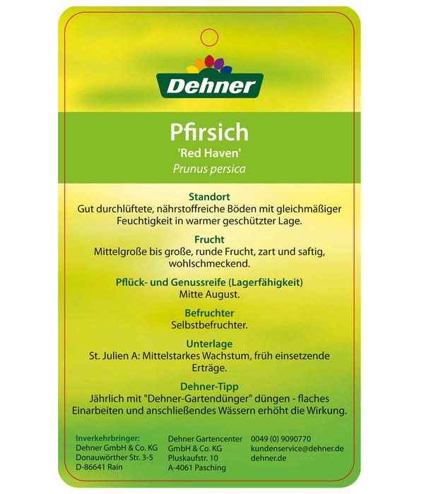 dehner pfirsich 39 red haven 39 dehner. Black Bedroom Furniture Sets. Home Design Ideas