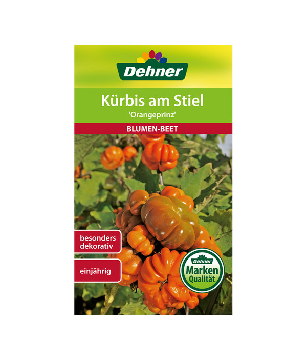 Dehner Samen Kürbis am Stiel \'Orangeprinz\' | Dehner