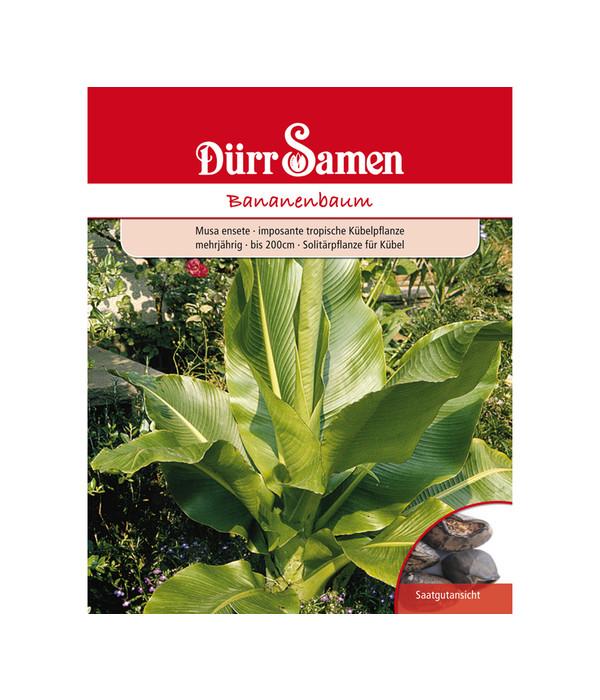 Berühmt Dürr Samen Bananenbaum | Dehner &CG_63